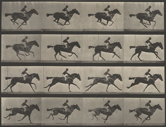 Horse in Motion, Eadweard Muybridge, ca. 1886 Photography collection, Harry Ransom Center.